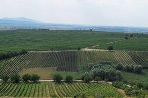 Fyloxéra sa stala postrachom vinohradníkov celého sveta
