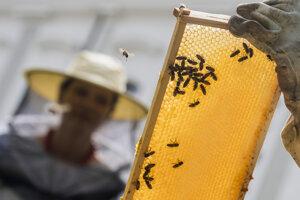 Včely v Prezidentskej záhrade.