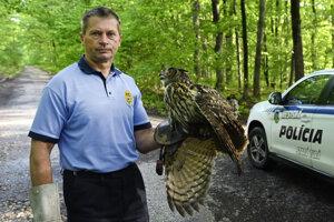 Náčelník mestskej polície v Starej Turej Ľubomír Málek vypúšťa po zotavení do voľnej prírody výra skalného, 18. mája 2021 v Starej Turej.