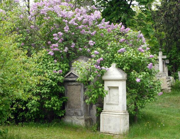 Cintorín Sankt Marx