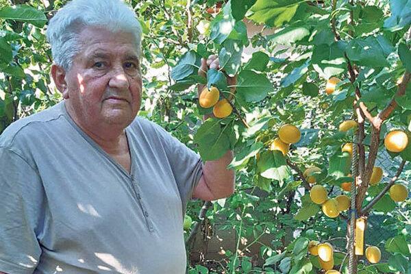 Pán Sabo je držiteľom viacerých ocenení a rekordov. V roku 2019 mal plody na marhuli odrody Fardao po celý október a obral ich až 5. novembra.