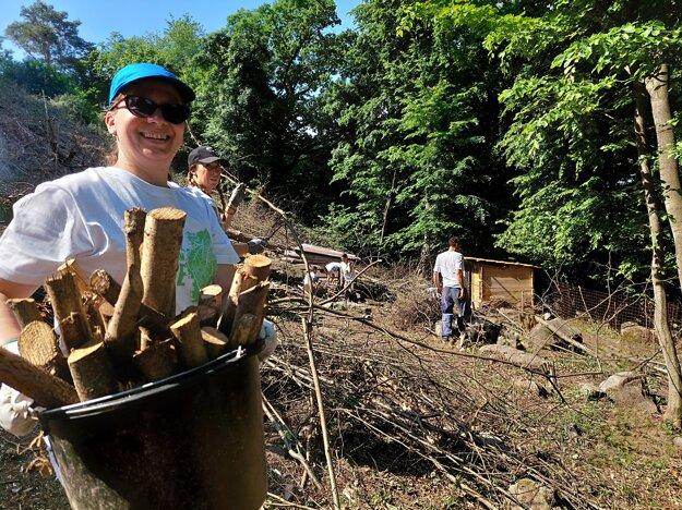Dobrovoľníci pri Prešove pomáhajú upravovať ohradu pre kozy.