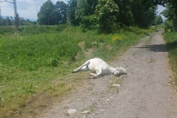 Fotografie vyčerpaných poníkov ľudí pobúrili.