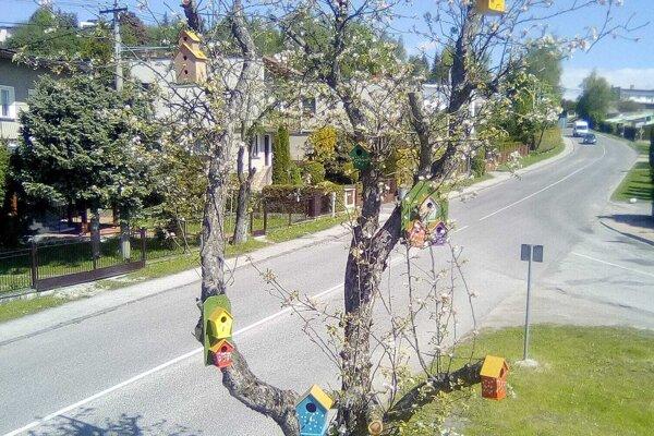 Starú jabloň zdobia farebné vtáčie búdky.