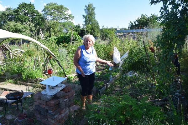 Pani Viera sa tešila na tulipány, prišla one na jar. Zlodej si pravidelne všímal jej záhradku