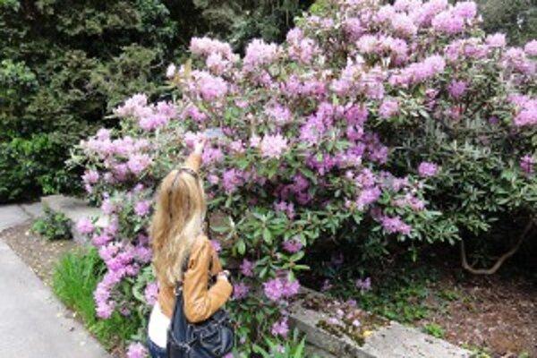 Arborétum Mlyňany otvorilo v piatok hlavnú sezónu.
