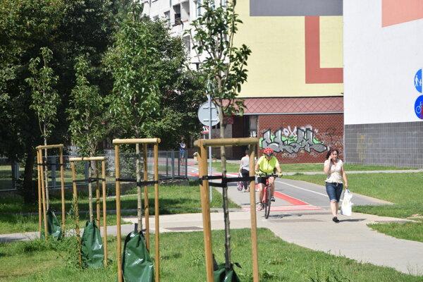 Mladé stromy na Solinkách.