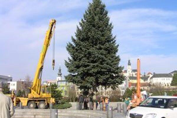 Strom na Svätoplukovom námestí.