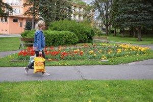 Kvety na jar rozkvitli i vTurčianskych Tepliciach, do výsadby cibuľovín sa púšťa iMartin.