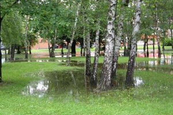 Pôda v parku je silne podmočená, hrozí pád stromov.