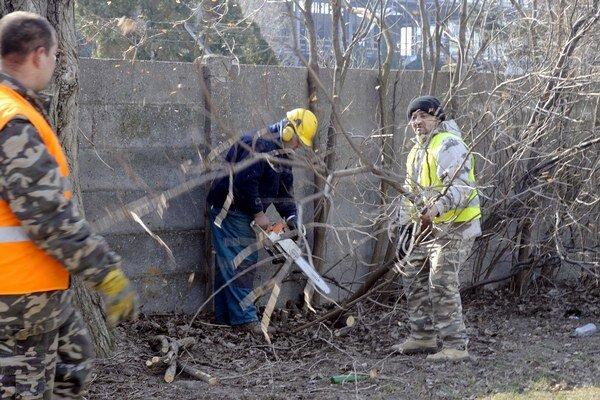 Stromy rúbali najmä pre ich nevhodné umiestnenie.
