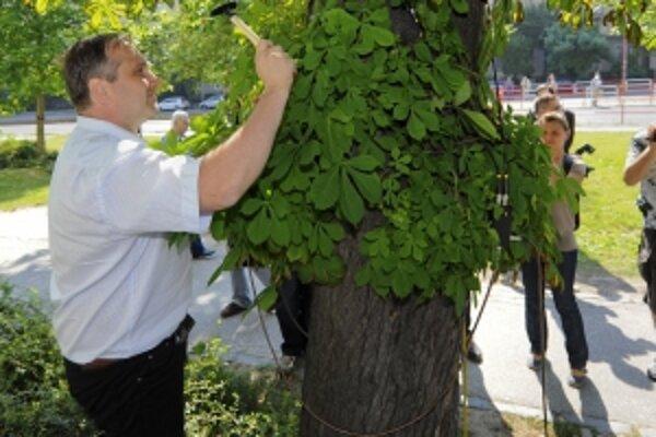 Výťažok z benefičného Ekofestu je každý rok venovaný na životné prostredie a výsadbu zelene v Trnave.