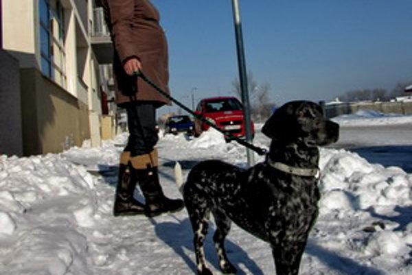 Mesto Trnava už viac ako desať rokov nezvyšovalo daň za psa.