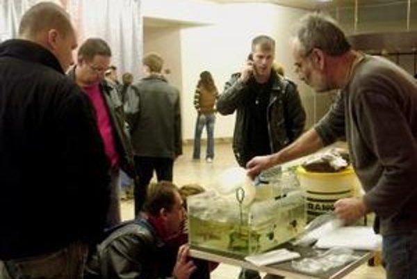 Miesto na burze akvaristiky a teraristiky budú mať aj tradičné rybičky.