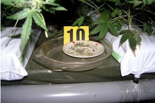 Dílerovi marihuany hrozí až desať rokov za mrežami.