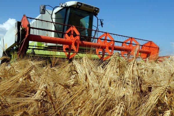 Veľké suchá ničia aj prípravu úrody na budúci rok.