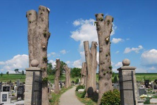 Z dvanástich obrovských stromov zostali iba holé kmene