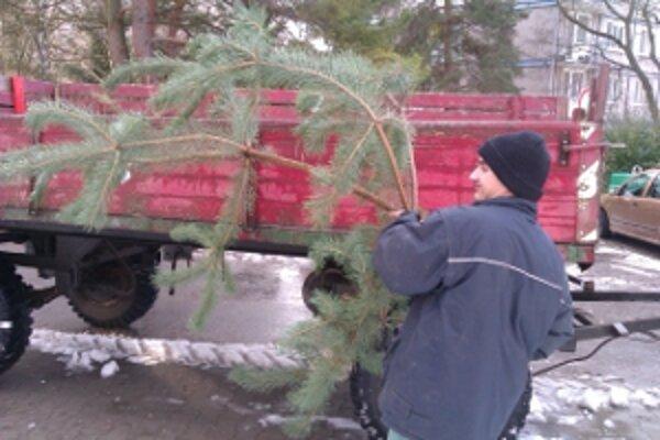 Pracovníci TSM nachádzajú živé vianočné stromčeky na sídliskách už iba sporadicky.