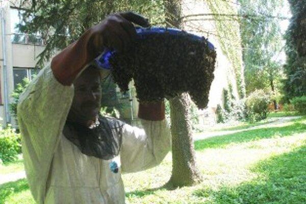 Zatúlaný včelí roj odovzdali hasiči včelárovi.