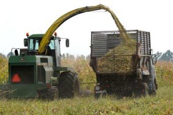 Úroda kukurice vraj bola tento rok dobrá