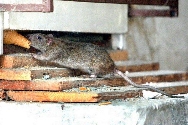Osadníci proti potkanom sami nebojujú.