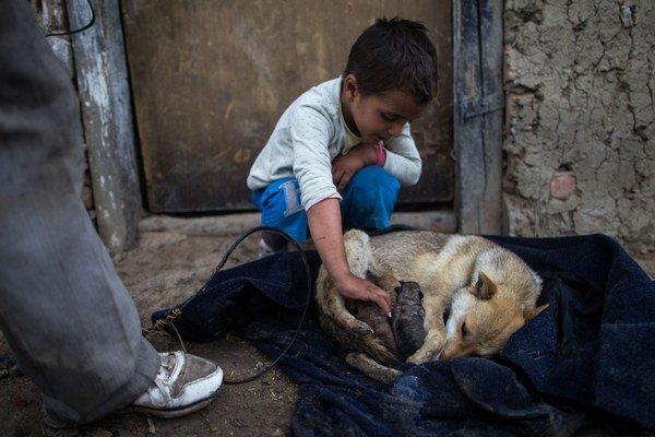 V osade žije mnoho psov, ktoré nepatria nikomu.
