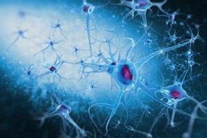 Bunky v našom mozgu sú zložitou spleťou.