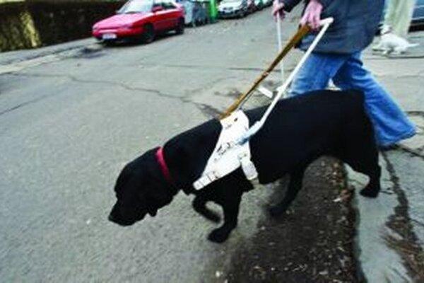Za psíkov musia majitelia zaplatiť daň. Niekde je vyššia, inde nižšia.