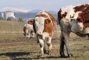 Chovateľovi zo Snežnice ukradli dobytok.
