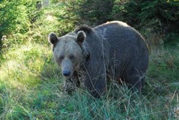 Stretnutie človeka s medveďom môže byť veľmi nebezpečné.