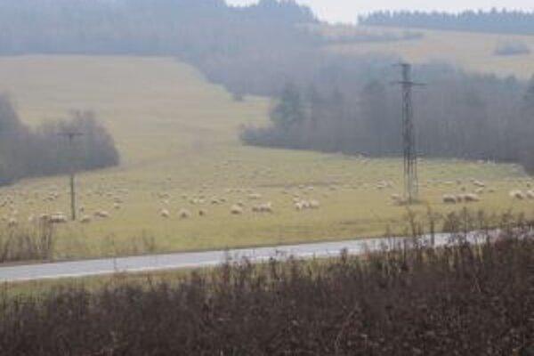 Ešte dovčera boli ovce vonku. Začalo však snežiť a tak sú už v maštaliach.