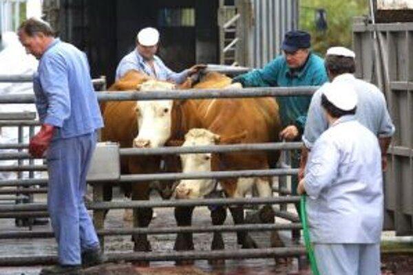 V niektorých poľnohospodárskych podnikoch museli v minulosti  stavy dobytka zredukovať.