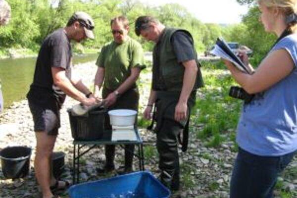Na dôkladné zmapovanie hospodárskych a ekologických škôd bolo potrebné vykonať terénny ichtyologický výskum.