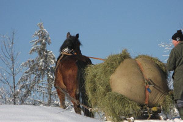 Kôň pomáha zvieratám v lese.