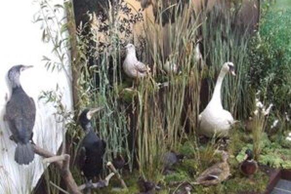 Na zaujímavej výstave dostanú školáci šancu učiť sa v zaujímavých priestoroch environmentálne predmety.