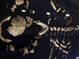 Pozostatky Homo naledi.