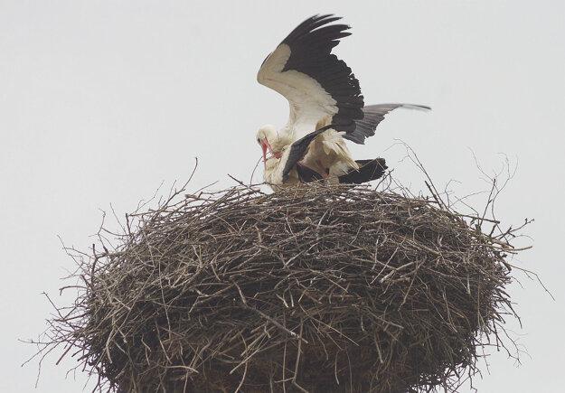 A čoskoro už bude vtáčí domček plný detského kriku
