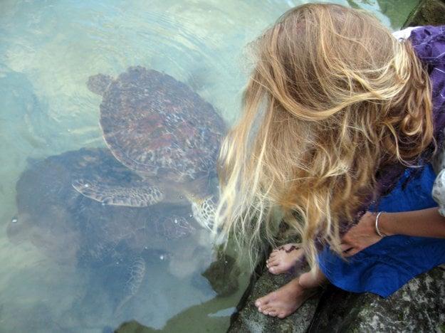 V prírodnom akváriu Mnarani možno vidieť päť ohrozených druhov korytnačiek.