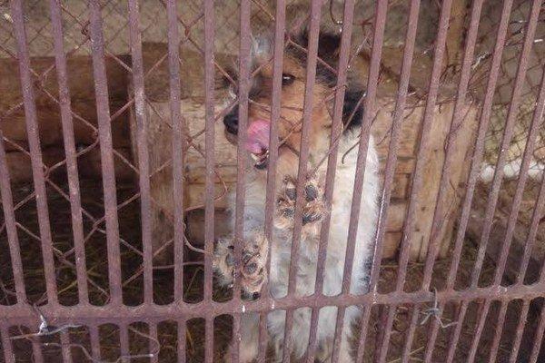 Majiteľ drží svojich psov v nevyhovujúcich podmienkach.