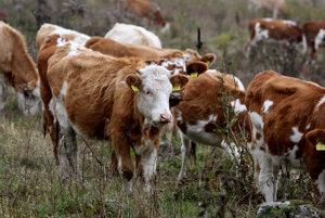 S chovom dojníc musia niektoré agropodniky skončiť.
