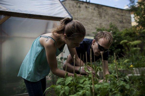 Poobede prichádzajú do komunitnej záhrady na Sasinkovej ulici pestovatelia.