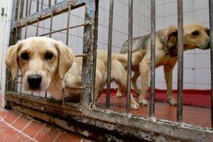 Túlavé, zranené alebo uhynuté zvieratá nahláste na linke 159.