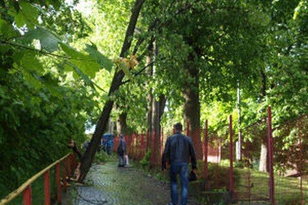 Stromy v aleji popri chodníku na železničnú stanicu sa včera nebezpečne nakláňali. Jeden z nich ostal spadnutý ponad frekventovanú trasu.
