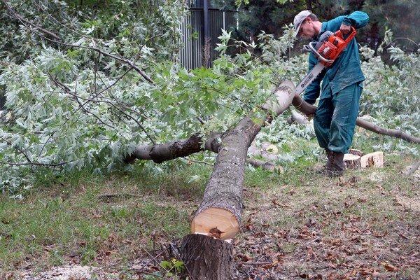 Lamačanom sa nepáči zámer SPP vyrúbať 49 dospelých stromov.
