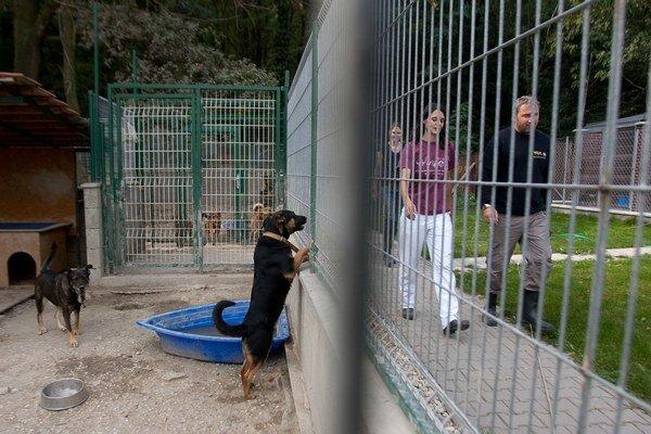 V bratislavskom útulku budete môcť svojim deťom ukázať už aj hospodárske zvieratá.