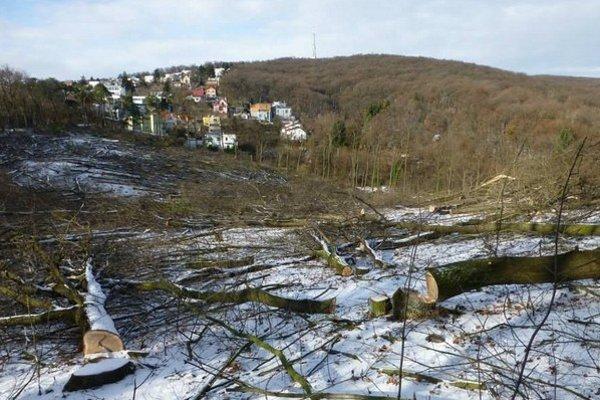 Na Kolibe nad Bratislavou vypílili stromy na dvoch parcelách. Najskôr v októbri, druhý krát pred týždňom.