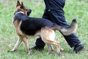 Ženu objavil v zastalnej posteli policajný pes.