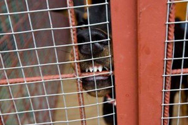 Psy ušli zo zabezpečeného objektu tak, že sa podhrabali pod plot.