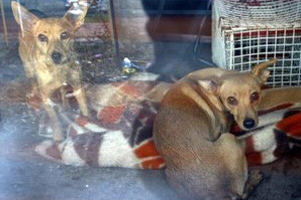 Túlavé zvieratá bude pre mesto odchytávať Sloboda zvierat.