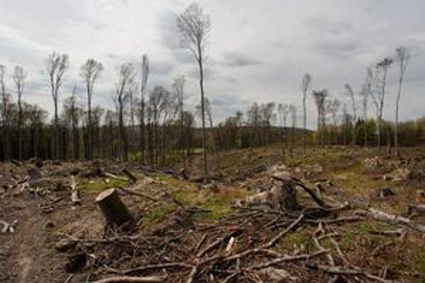Pozostatky minuloročnej kalamity doplnili aj čerstvo spadnuté stromy.